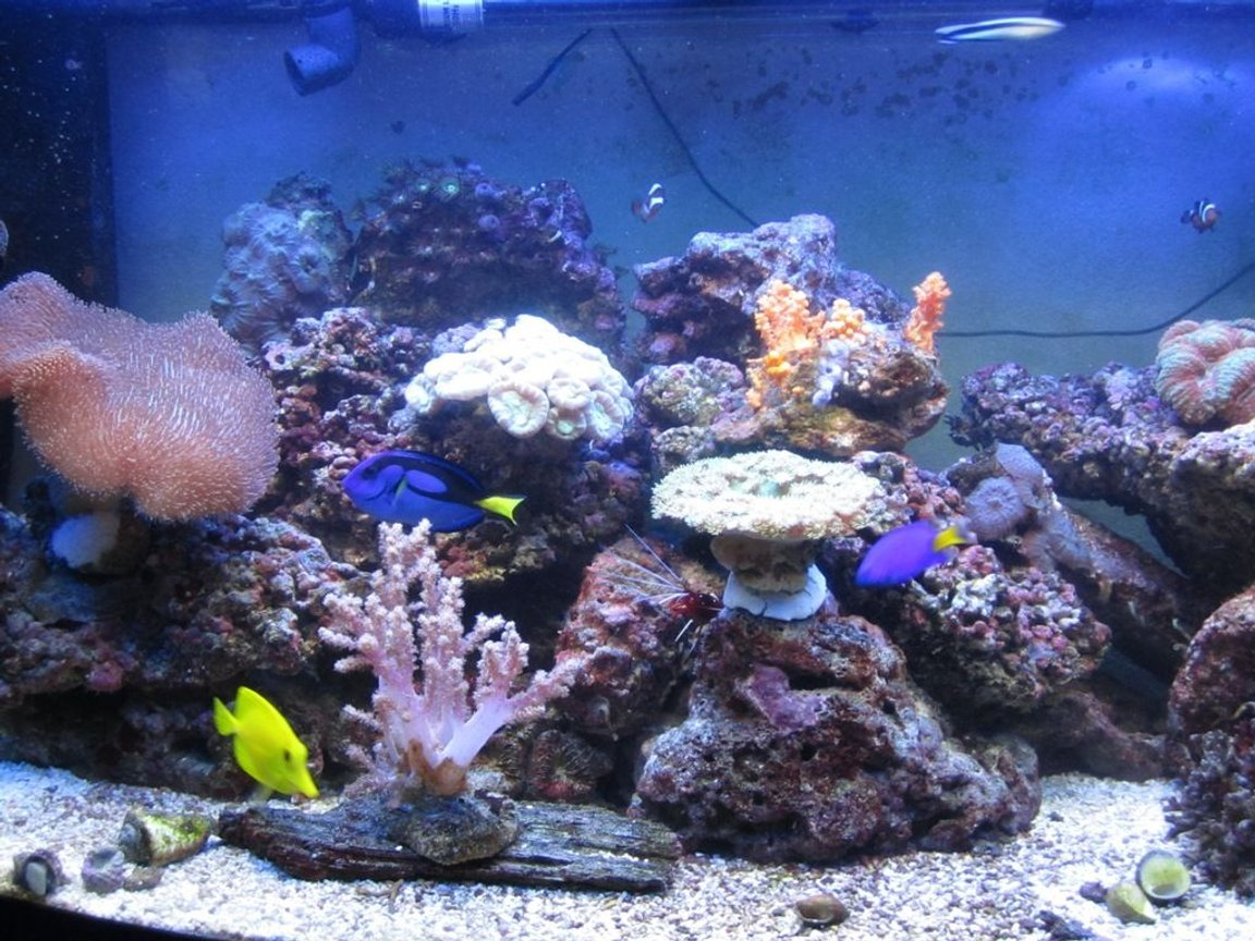 47 gallons reef tank (mostly live coral and fish) - Jan-11 (5months old)