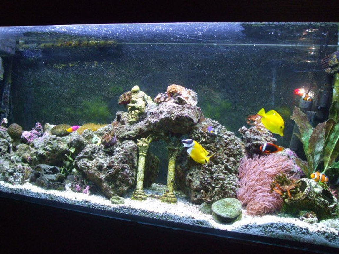 65 gallons reef tank (mostly live coral and fish) - My 65g Saltwater Tank