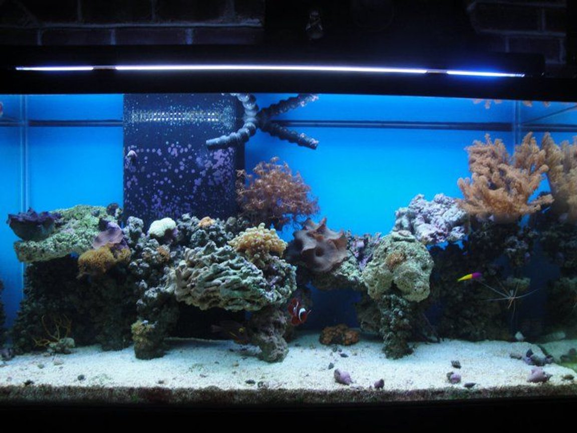 90 gallons reef tank (mostly live coral and fish) - 90