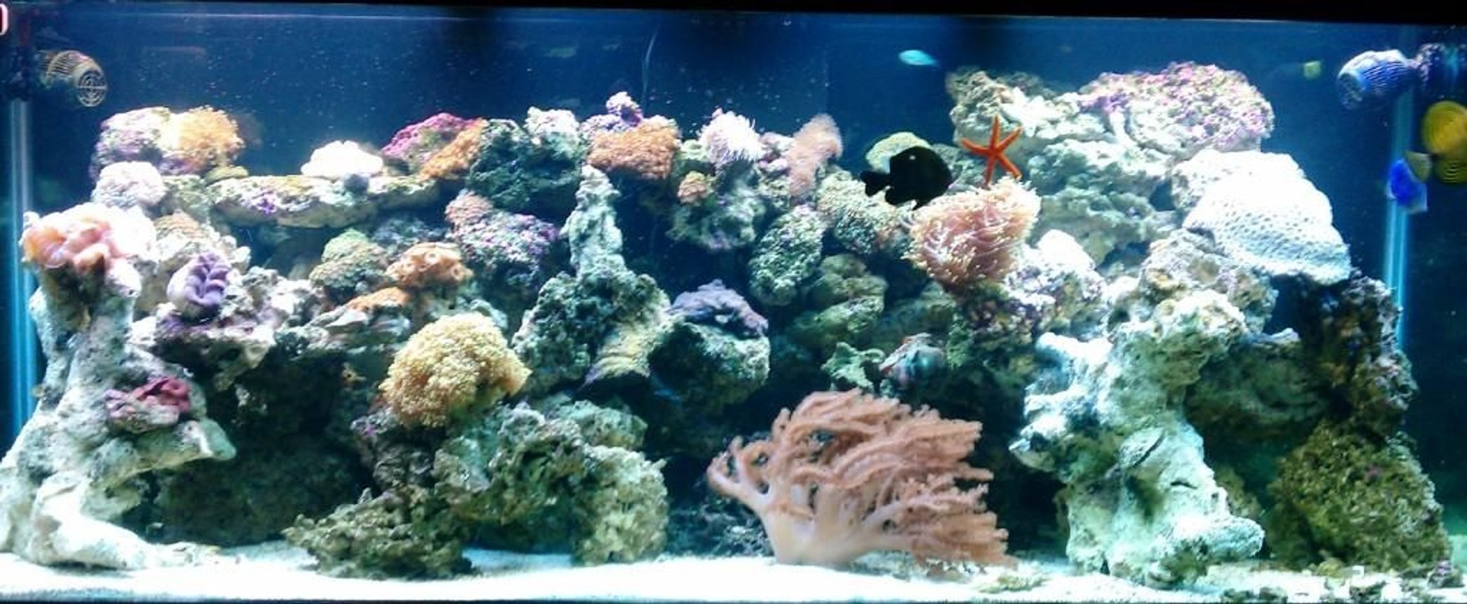 210 gallons reef tank (mostly live coral and fish) - about 10 months in... really just starting to get alot of Coraline... lots of polyps( brown, bright blue, orange, deep orange)... fox coral.. brain.. show size leather... open brain... hamer coral... torch coral..few differnt mushrooms.. and polyp head few fish(dont really want them anymore:) ) and some african starfish..