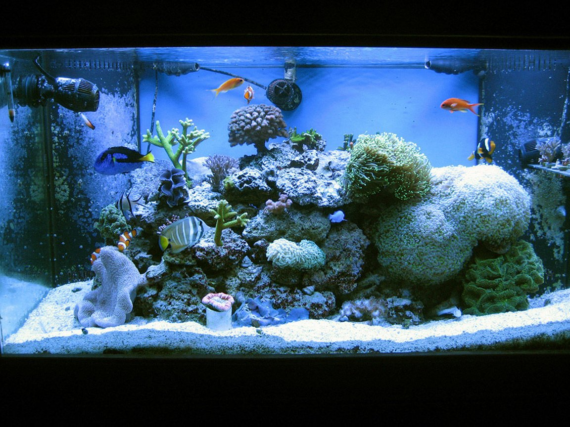 120 gallons reef tank (mostly live coral and fish) - My reef as of March 2011
