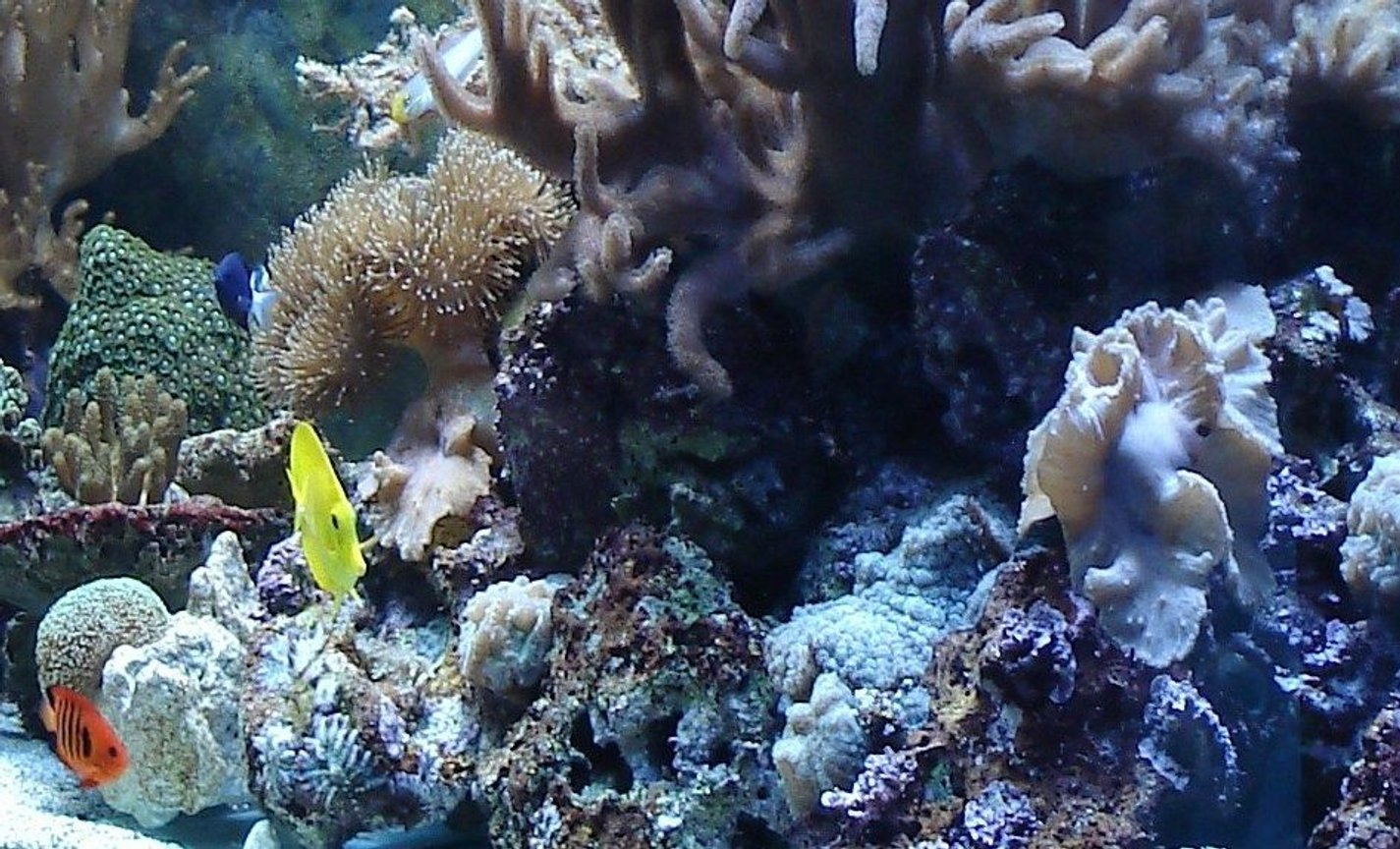 50 gallons reef tank (mostly live coral and fish) - my tank