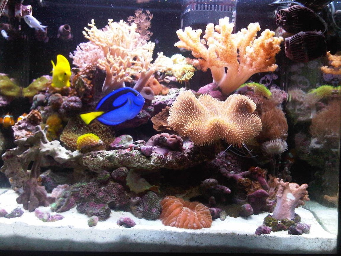 34 gallons reef tank (mostly live coral and fish) - After 14 Months