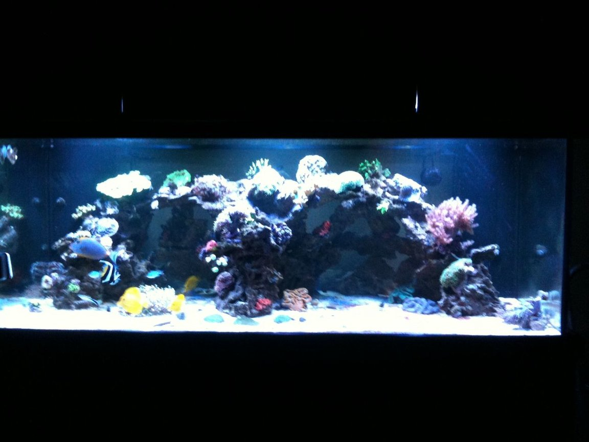 300 gallons reef tank (mostly live coral and fish) - Hamlin Family Reef Tank