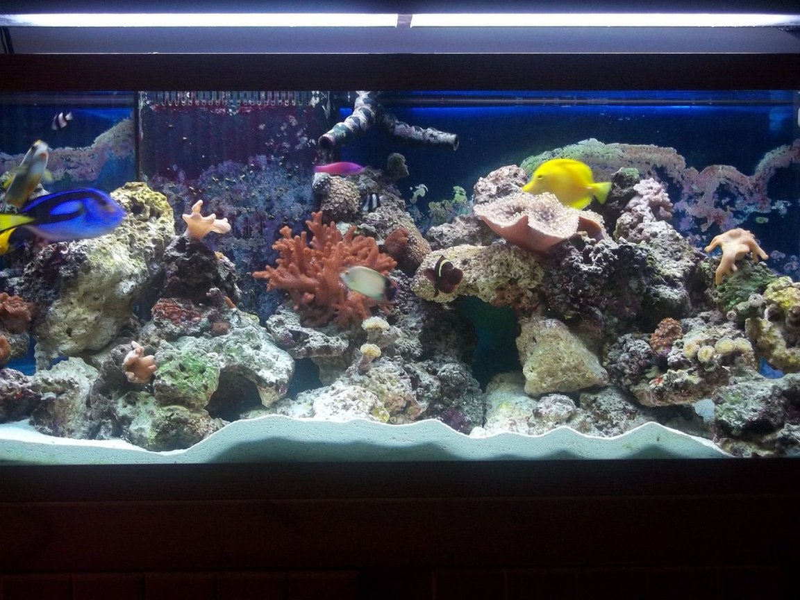 75 gallons reef tank (mostly live coral and fish) - tank 3.5 months old
