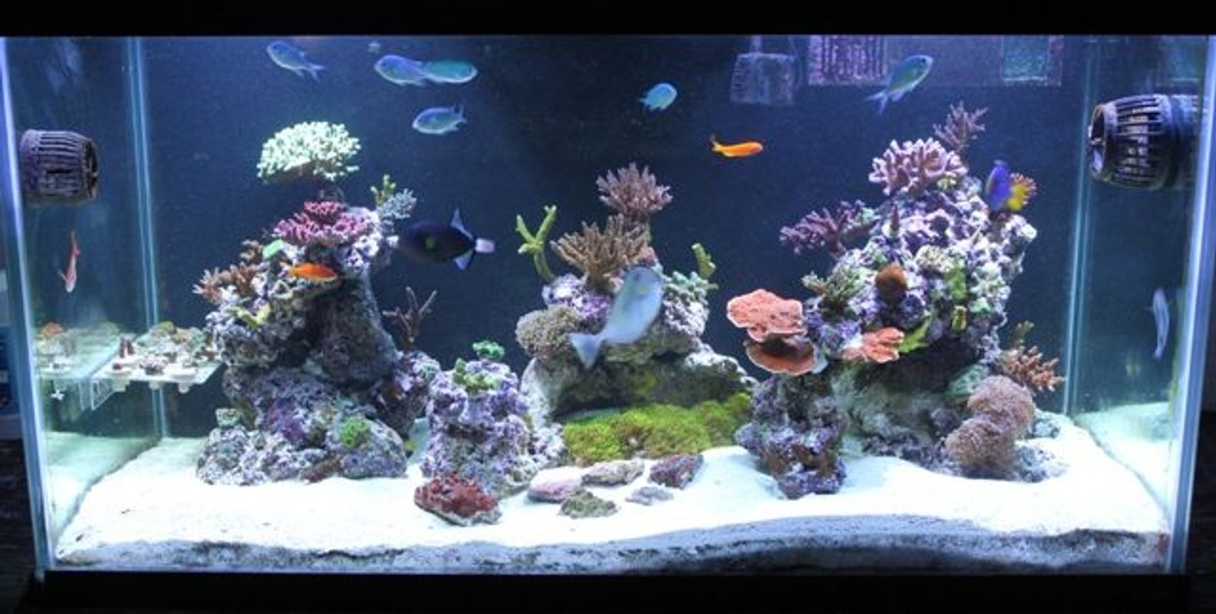 120 gallons reef tank (mostly live coral and fish) - 120g mostly sps tank.