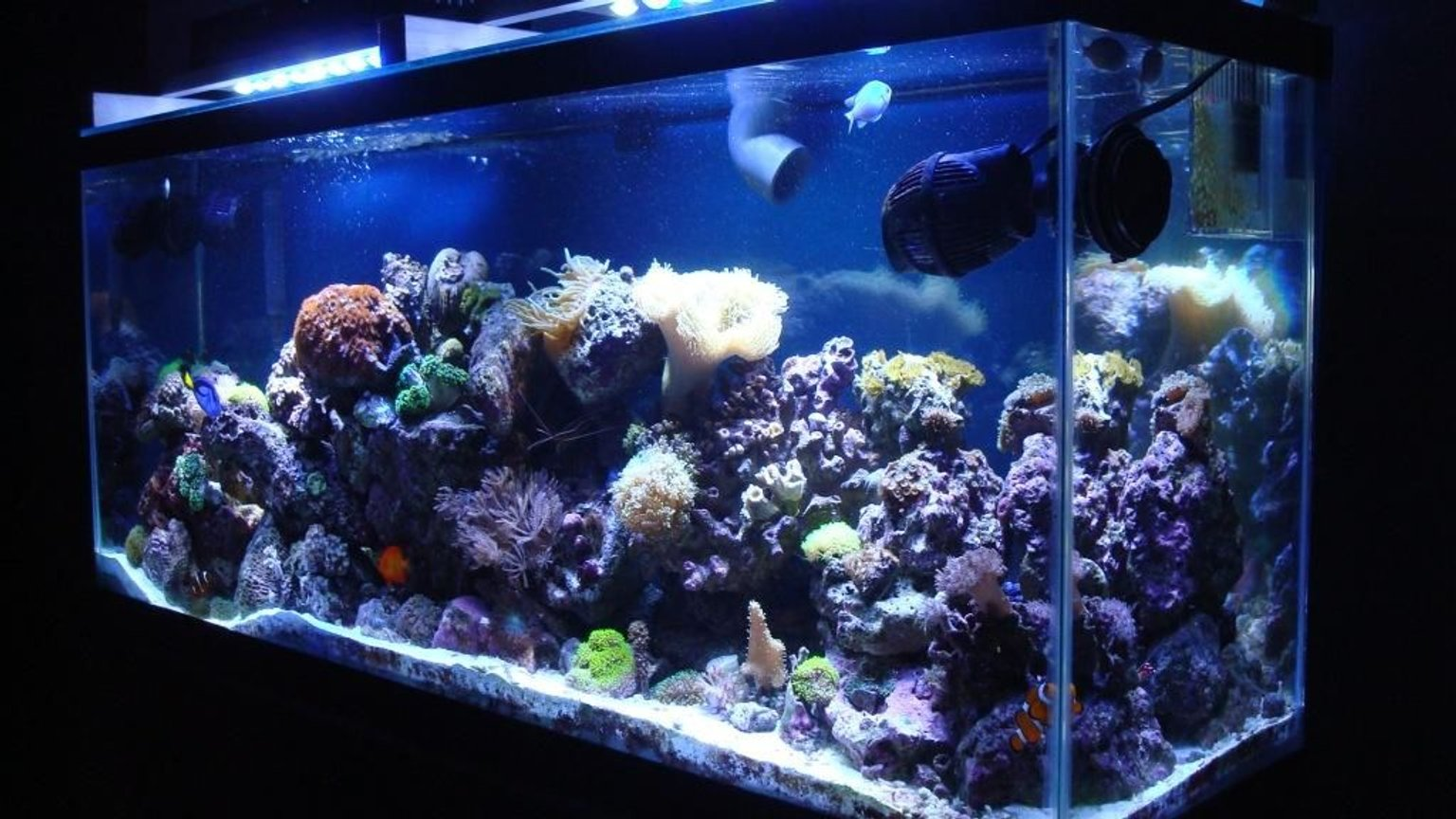 150 gallons reef tank (mostly live coral and fish) - 55 Gallon Salt Water Reef Tank