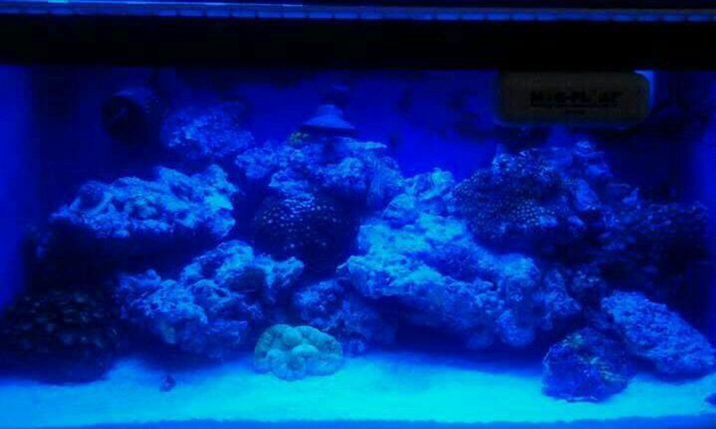 210 gallons reef tank (mostly live coral and fish) - My reef nano