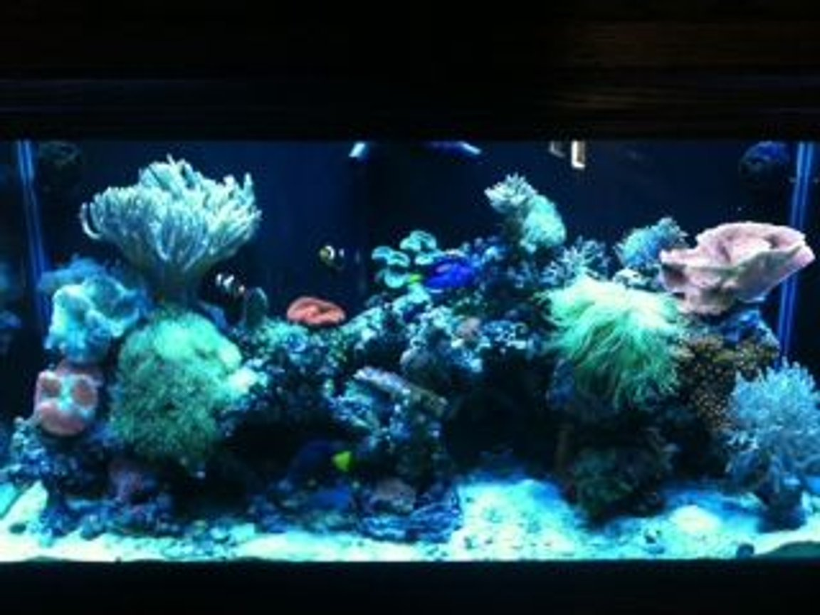 90 gallons reef tank (mostly live coral and fish) - September 10, 2011