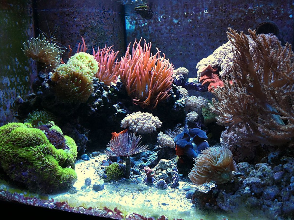 70 gallons reef tank (mostly live coral and fish) - 70g CUBE