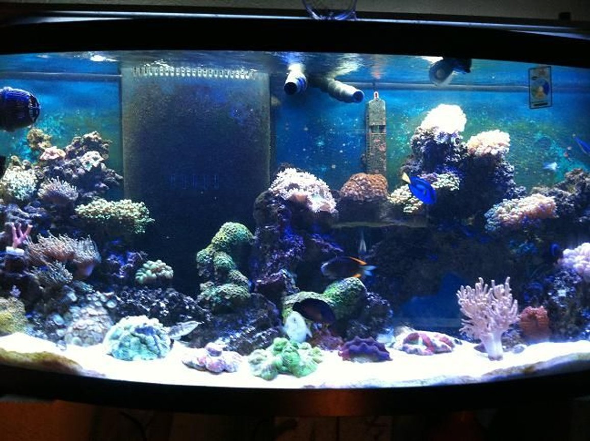 72 gallons reef tank (mostly live coral and fish) - my reef tank been runnin 8 months