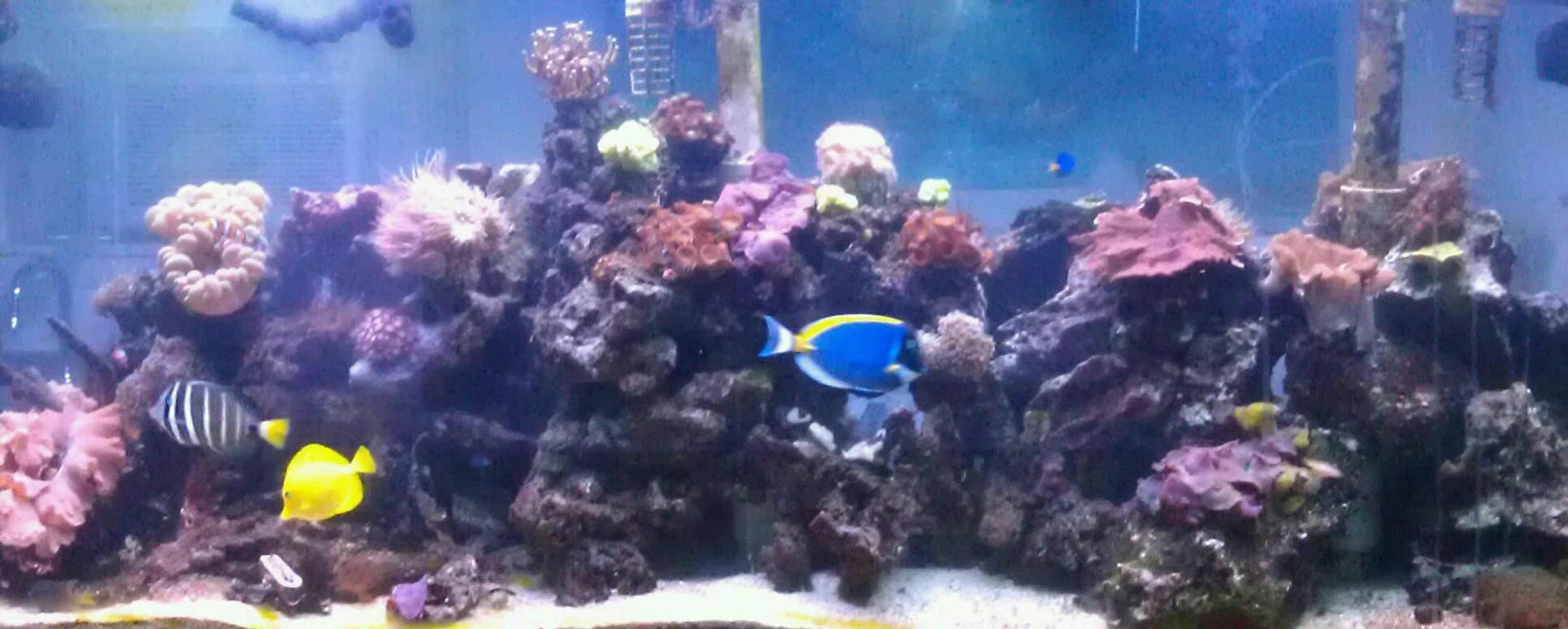 210 gallons reef tank (mostly live coral and fish) - 210 gal Reef Tank