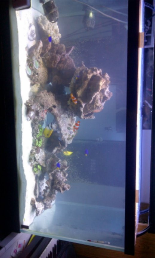 55 gallons reef tank (mostly live coral and fish) - new reed tank just purchased.