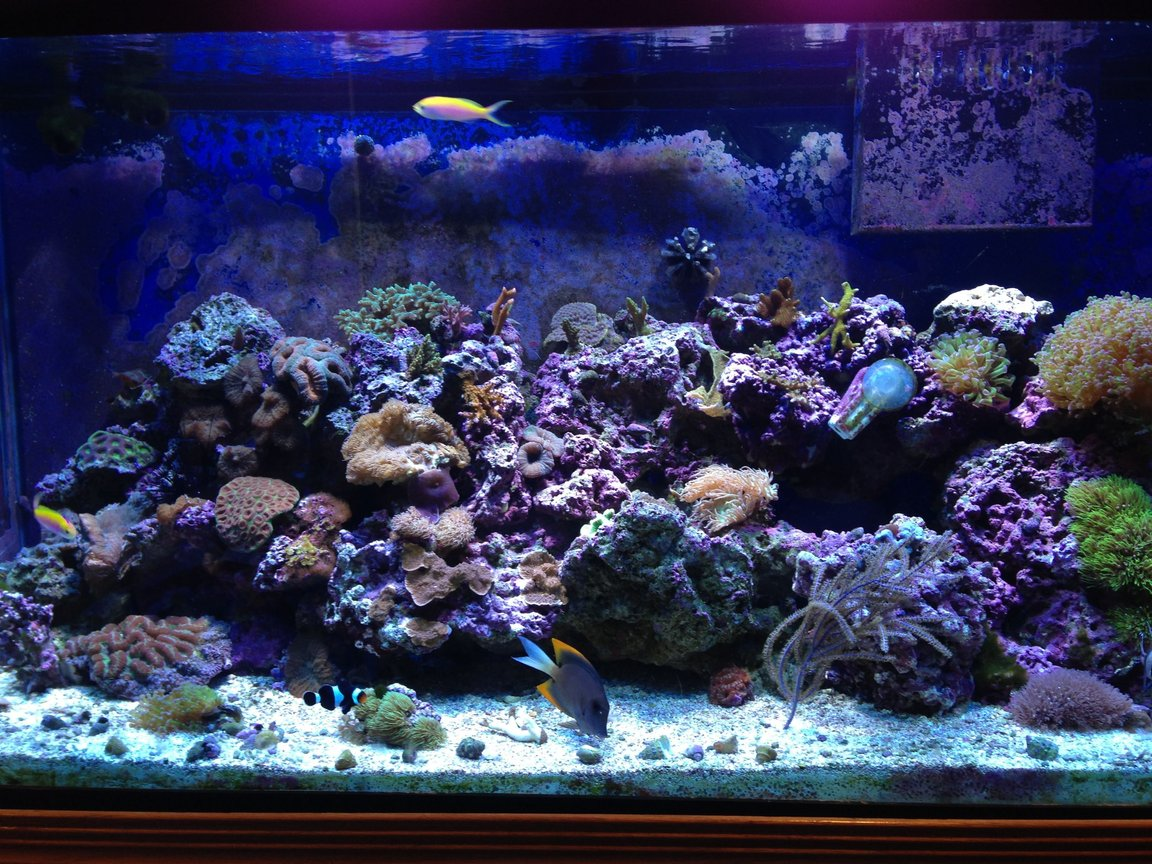 90 gallons reef tank (mostly live coral and fish) - 90 gallon mixed reef
