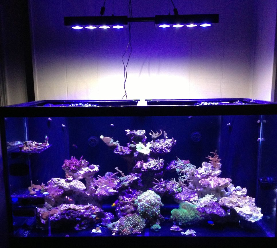 120 gallons reef tank (mostly live coral and fish) - 120 Gallon SPS/Mixed Reef