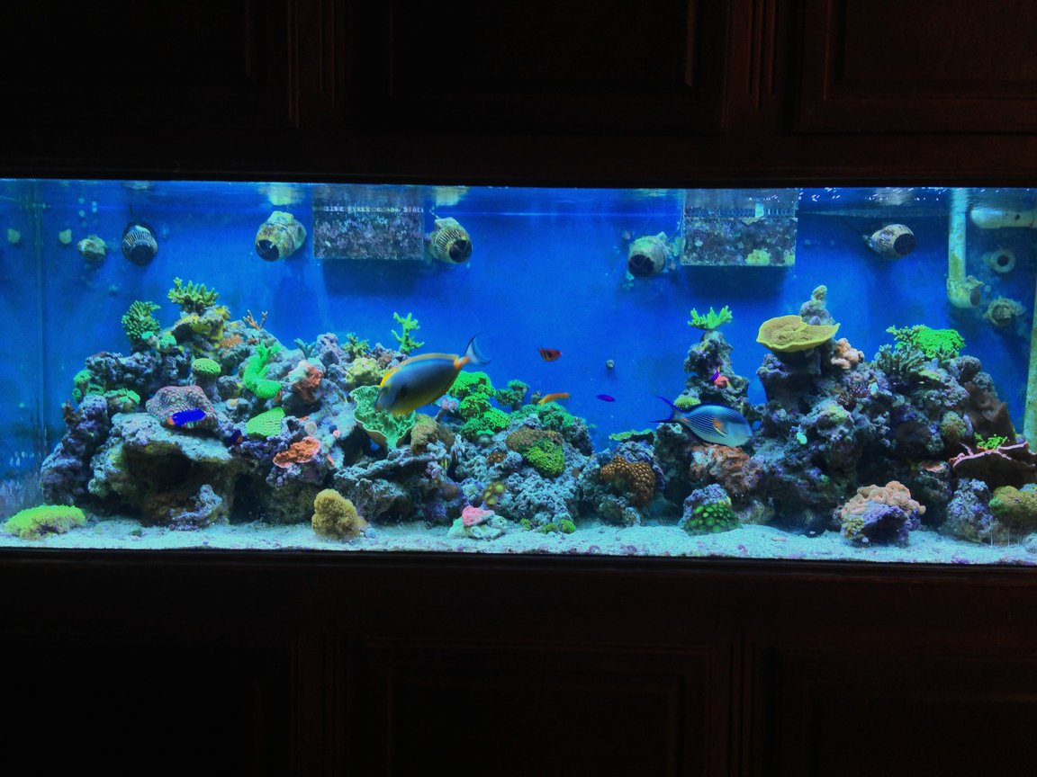 300 gallons reef tank (mostly live coral and fish) - 300 gal mix reef