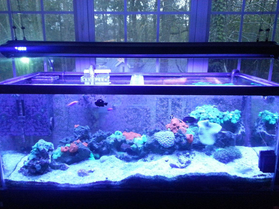 75 gallons reef tank (mostly live coral and fish) - Ready to be judged