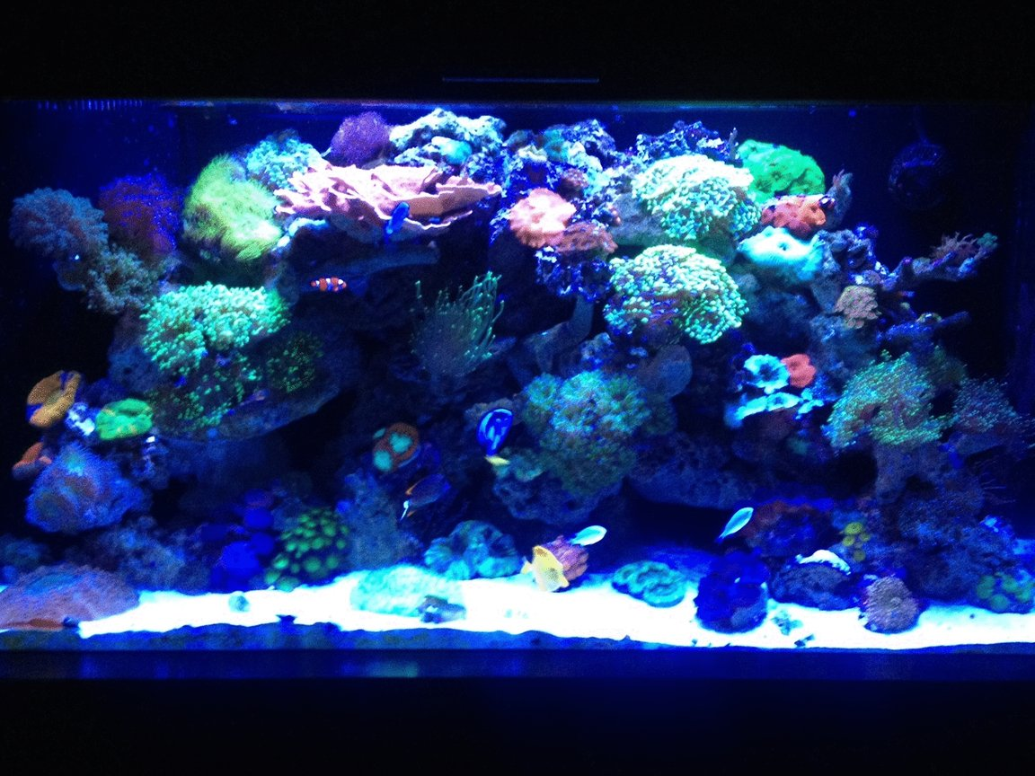 90 gallons reef tank (mostly live coral and fish) - Old shot let me know what you think, ill try and get a new one today, Mind you this was taken with an Iphone so quality is no the best
