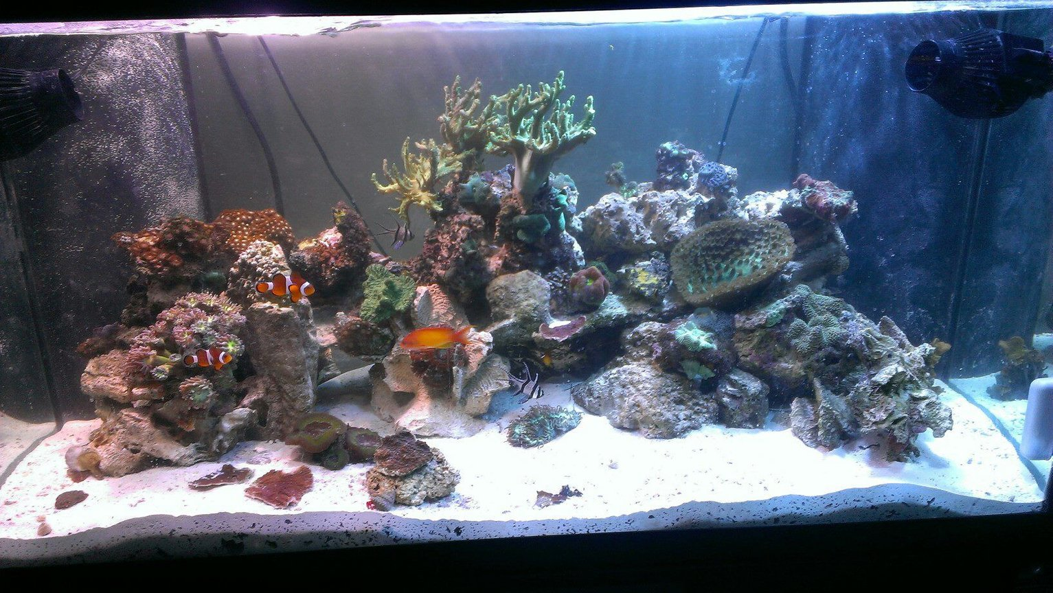 120 gallons reef tank (mostly live coral and fish)