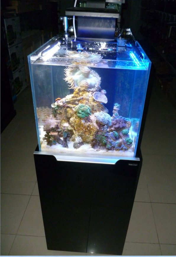 20 gallons reef tank (mostly live coral and fish) - A snapshot of our baby reef at the lfs I work at. Adding it now, so I can add an update later..... and show where it all started!