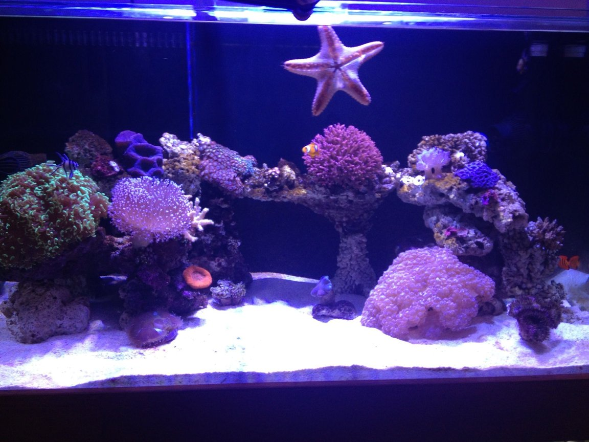 150 gallons reef tank (mostly live coral and fish) - Display tank.