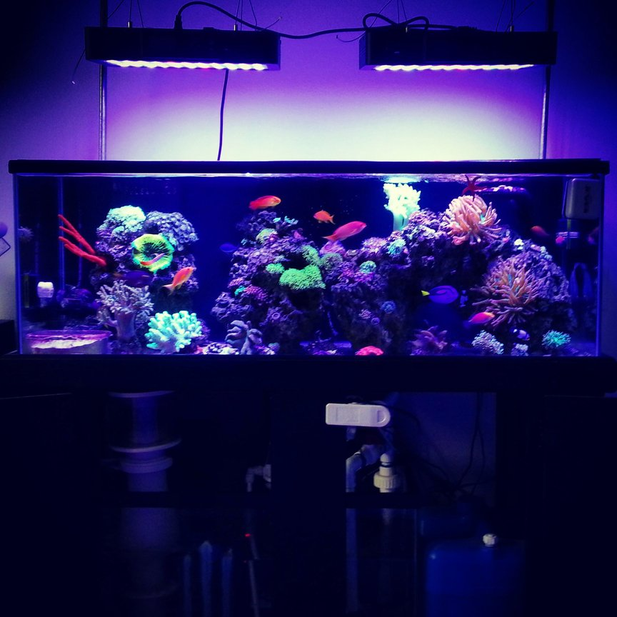 60 gallons reef tank (mostly live coral and fish) - Full tank shot