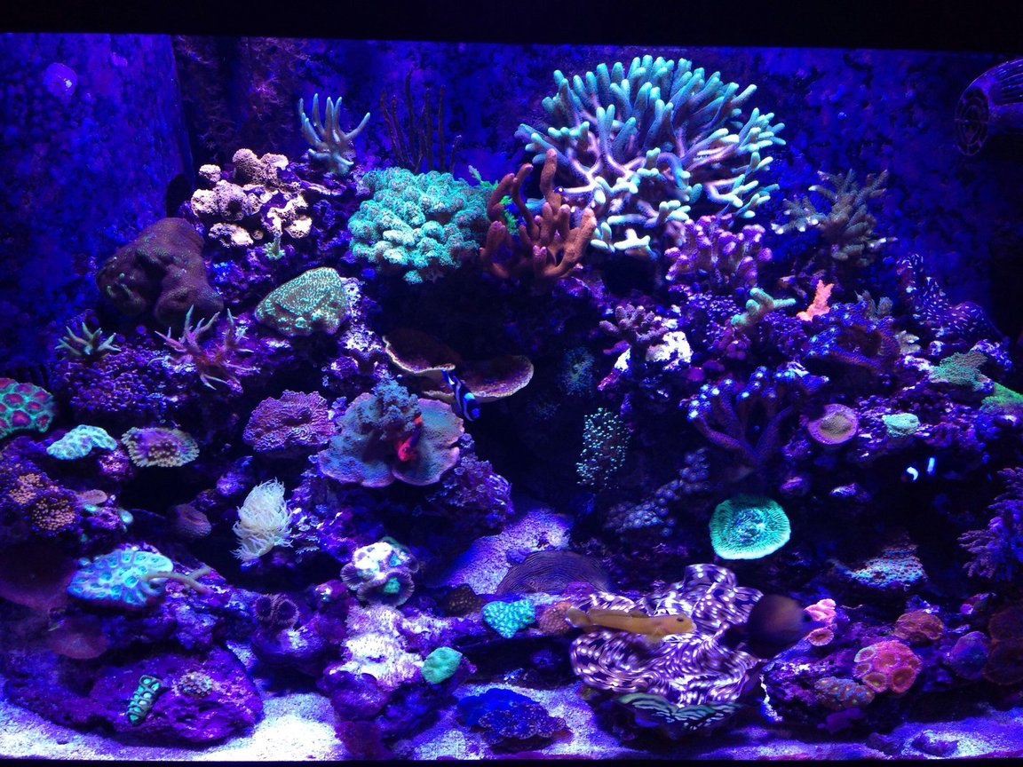 65 gallons reef tank (mostly live coral and fish) - 65 gallon reef