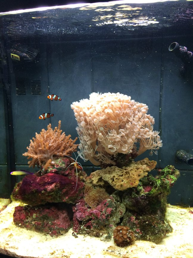 1 gallon reef tank (mostly live coral and fish) - Live corals, clowns, Shrimp, snails, crabs, gramma, fire fish:-)