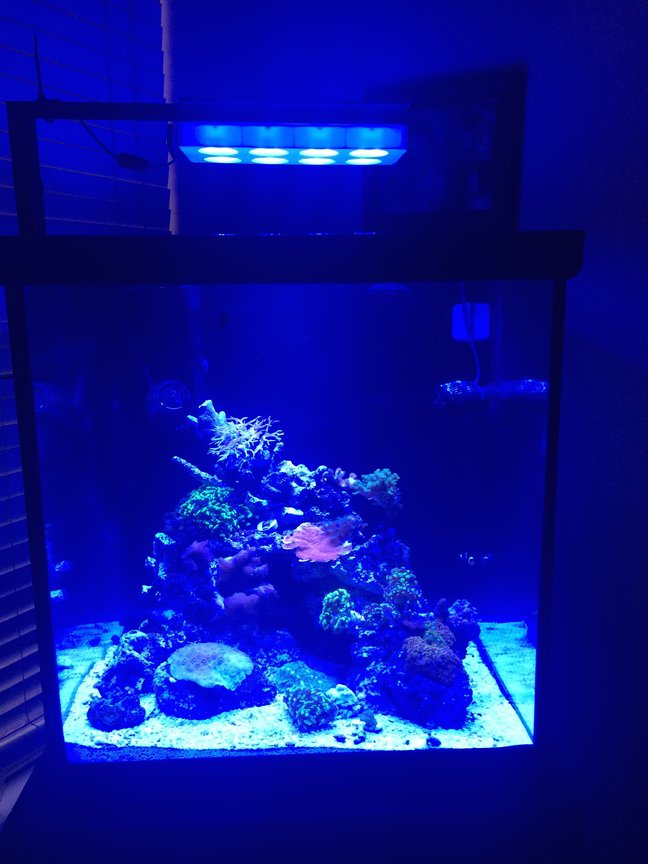 60 gallons reef tank (mostly live coral and fish) - Newly started reef tank