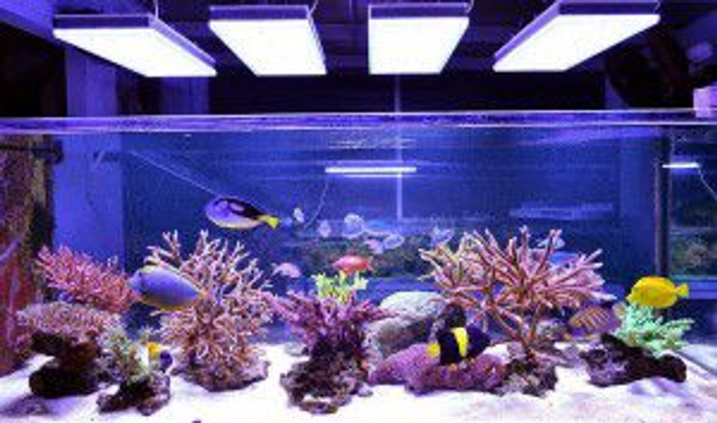2 gallons reef tank (mostly live coral and fish) - this is my fish tank with lighting