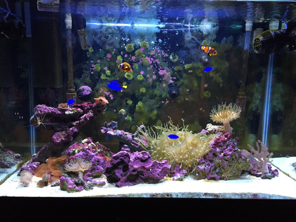 65 gallons reef tank (mostly live coral and fish) - My 1 year old 65 gallon