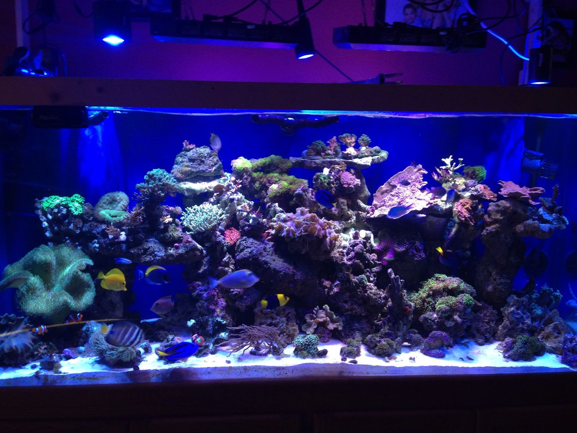 220 gallons reef tank (mostly live coral and fish) - a coral reef hard and soft