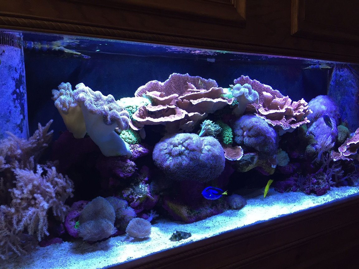 150 gallons reef tank (mostly live coral and fish) - 150 gallon reef tank.