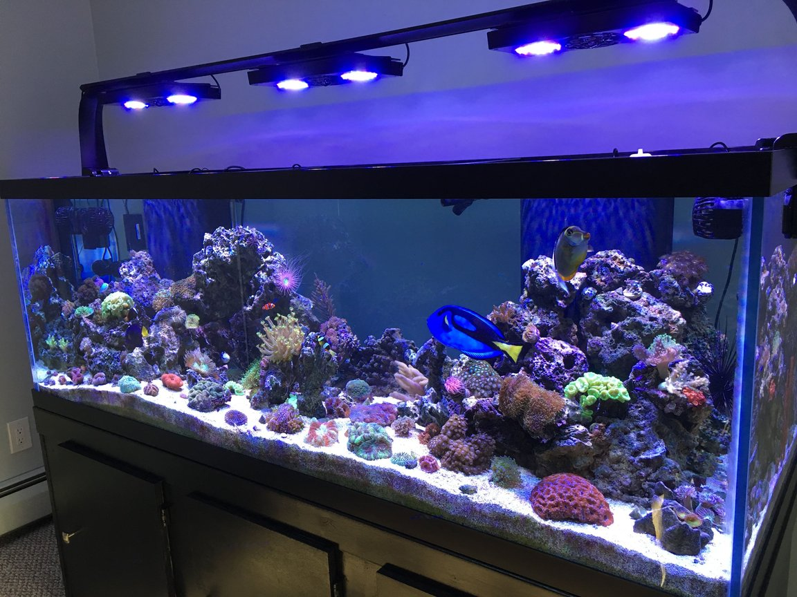 180 gallons reef tank (mostly live coral and fish) - My 180 gallon reef tank!