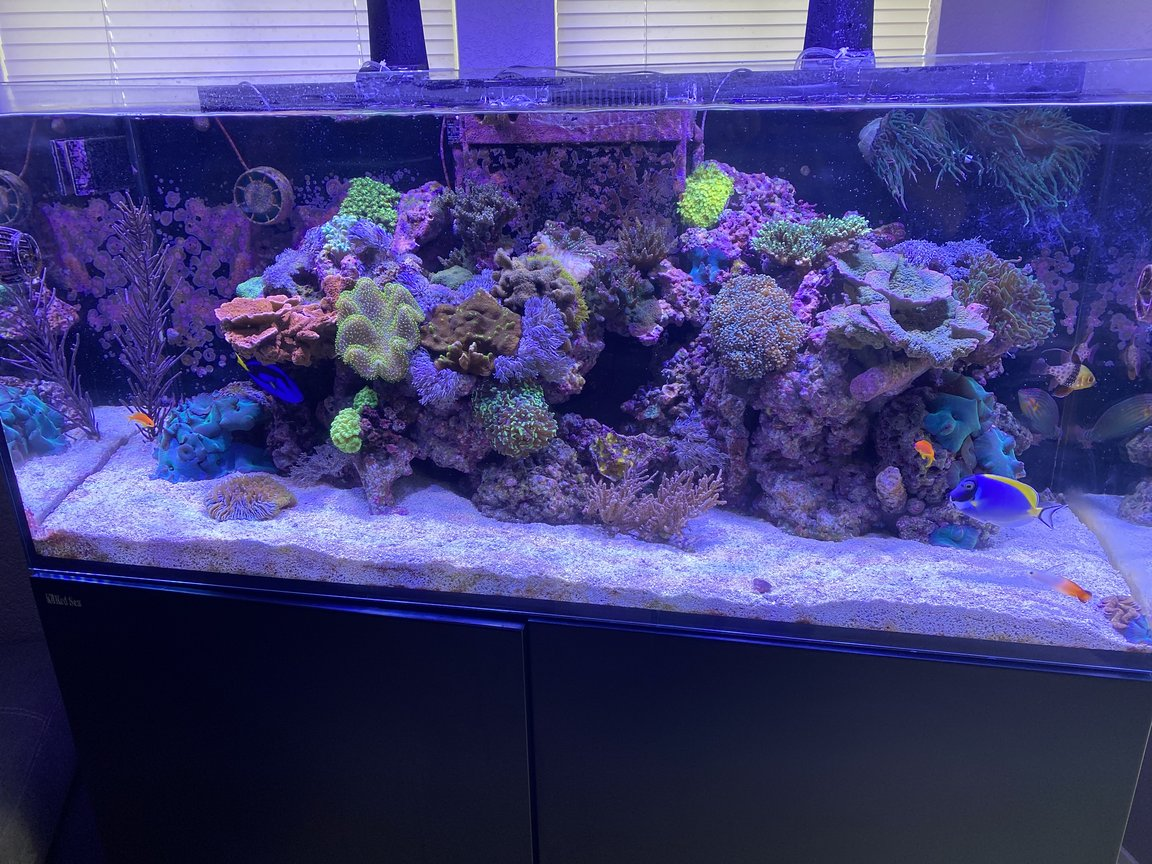 91 gallons reef tank (mostly live coral and fish) - My reef tank.