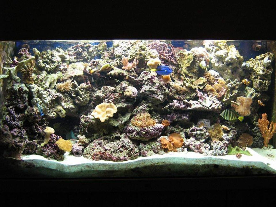 350 gallons reef tank (mostly live coral and fish) - my reef tank