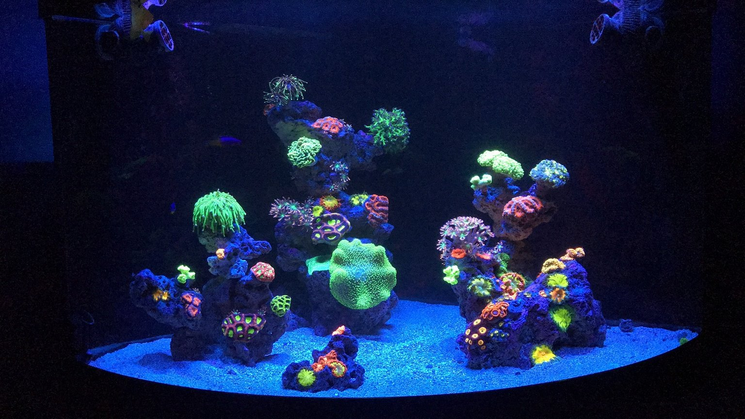 180 gallons reef tank (mostly live coral and fish) - 54 corner