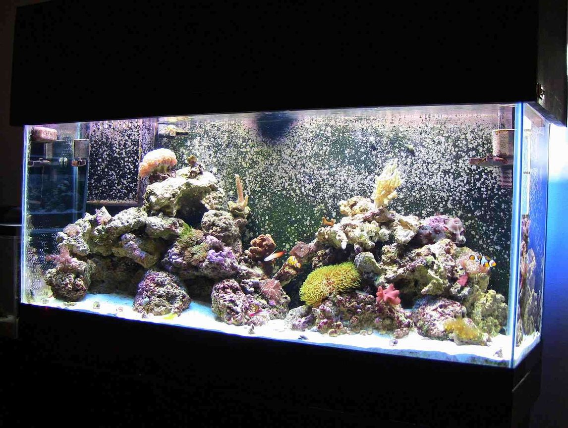 55 gallons reef tank (mostly live coral and fish) - 55g Reef