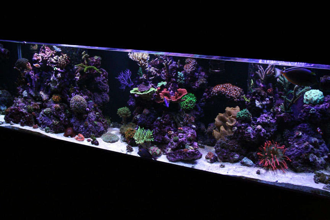 125 gallons reef tank (mostly live coral and fish) - 125G Mixed Reef