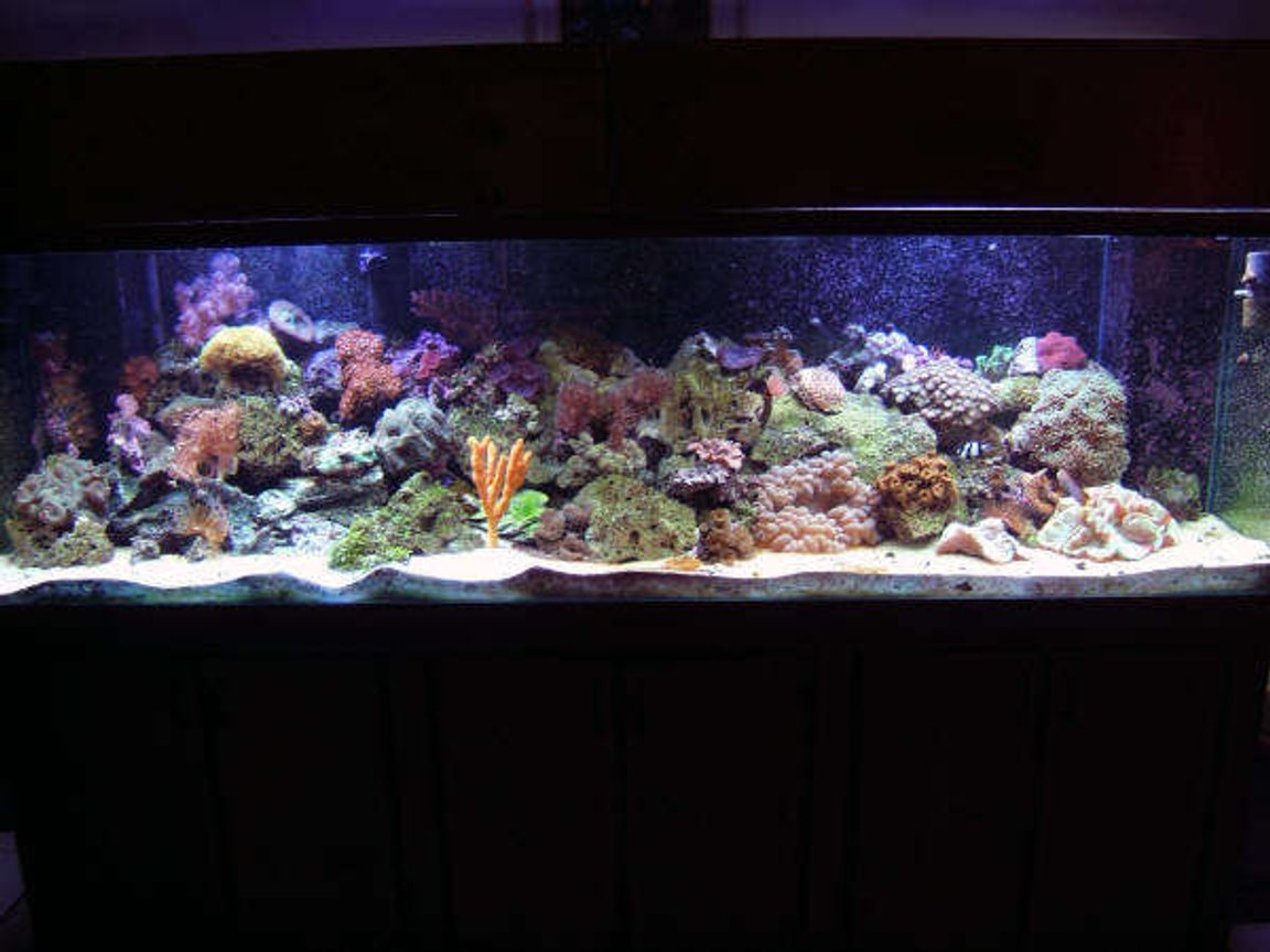 160 gallons reef tank (mostly live coral and fish) - SKYDIVE182's Reef Tank
