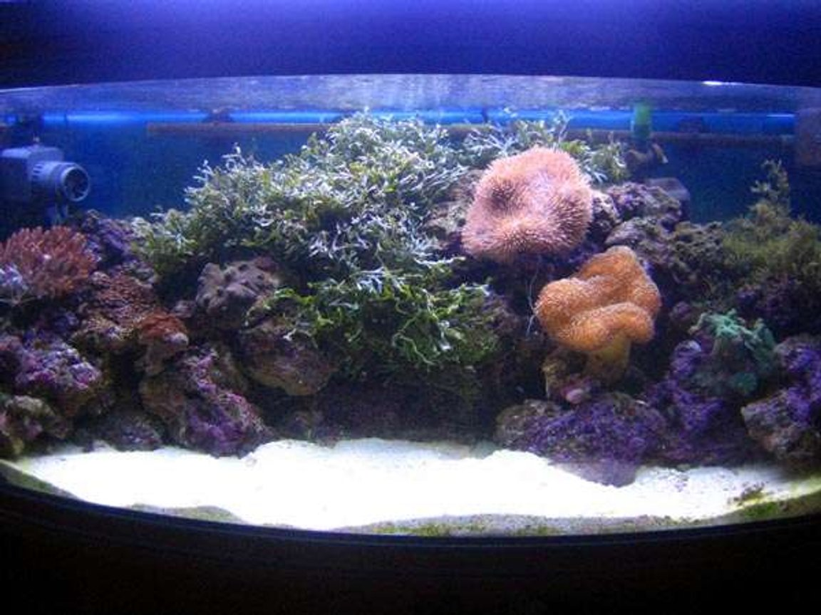 80 gallons reef tank (mostly live coral and fish) - must recent how of the tank !!