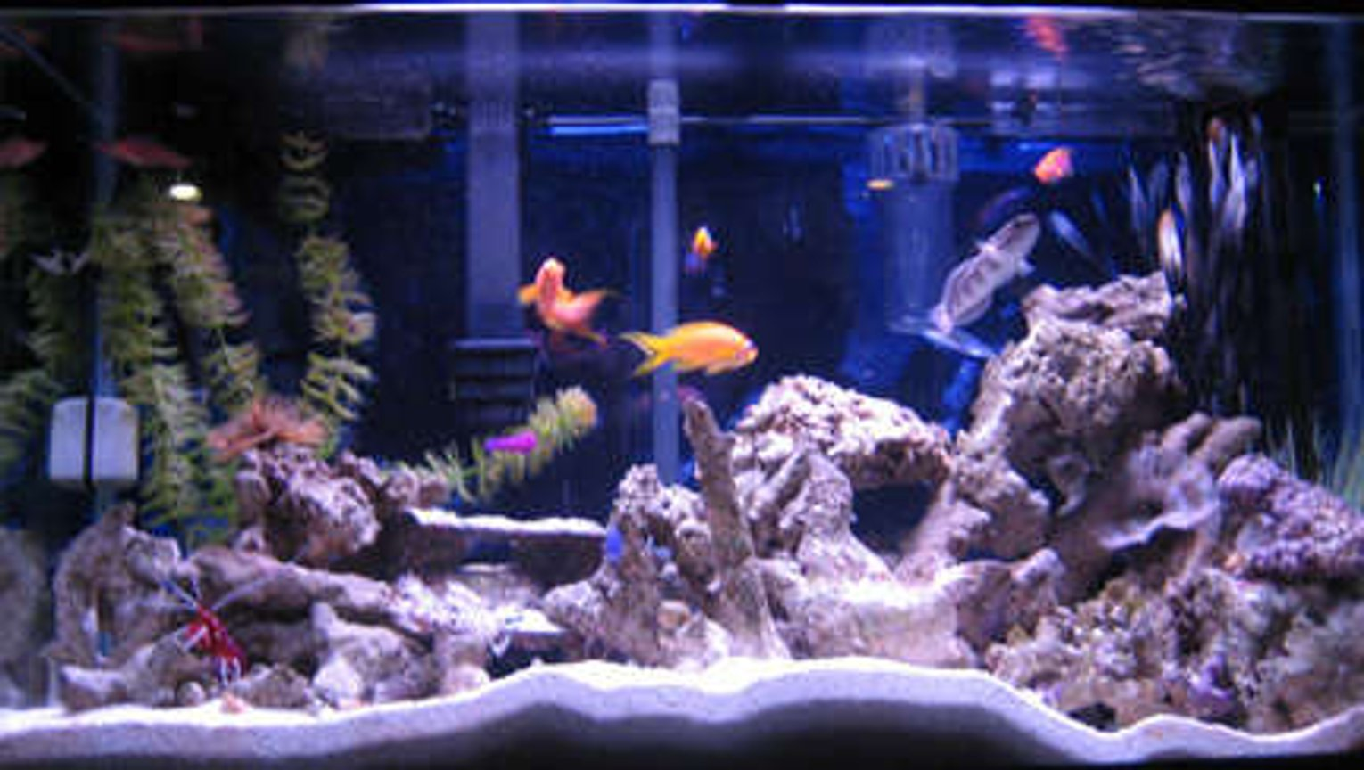 38 gallons reef tank (mostly live coral and fish) - fish tank 1 with fish, inverts, and live rock