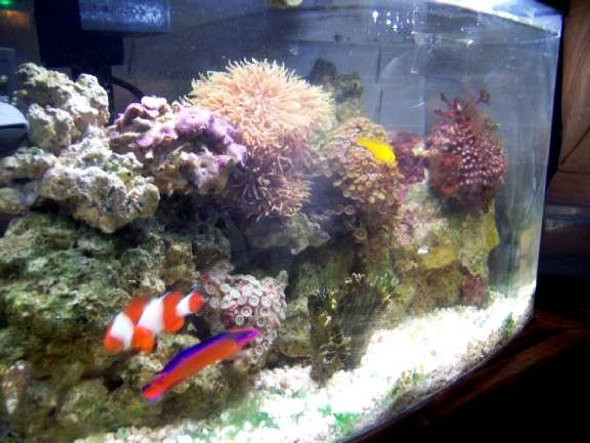 5 gallons reef tank (mostly live coral and fish) - my 5gallon reef updated