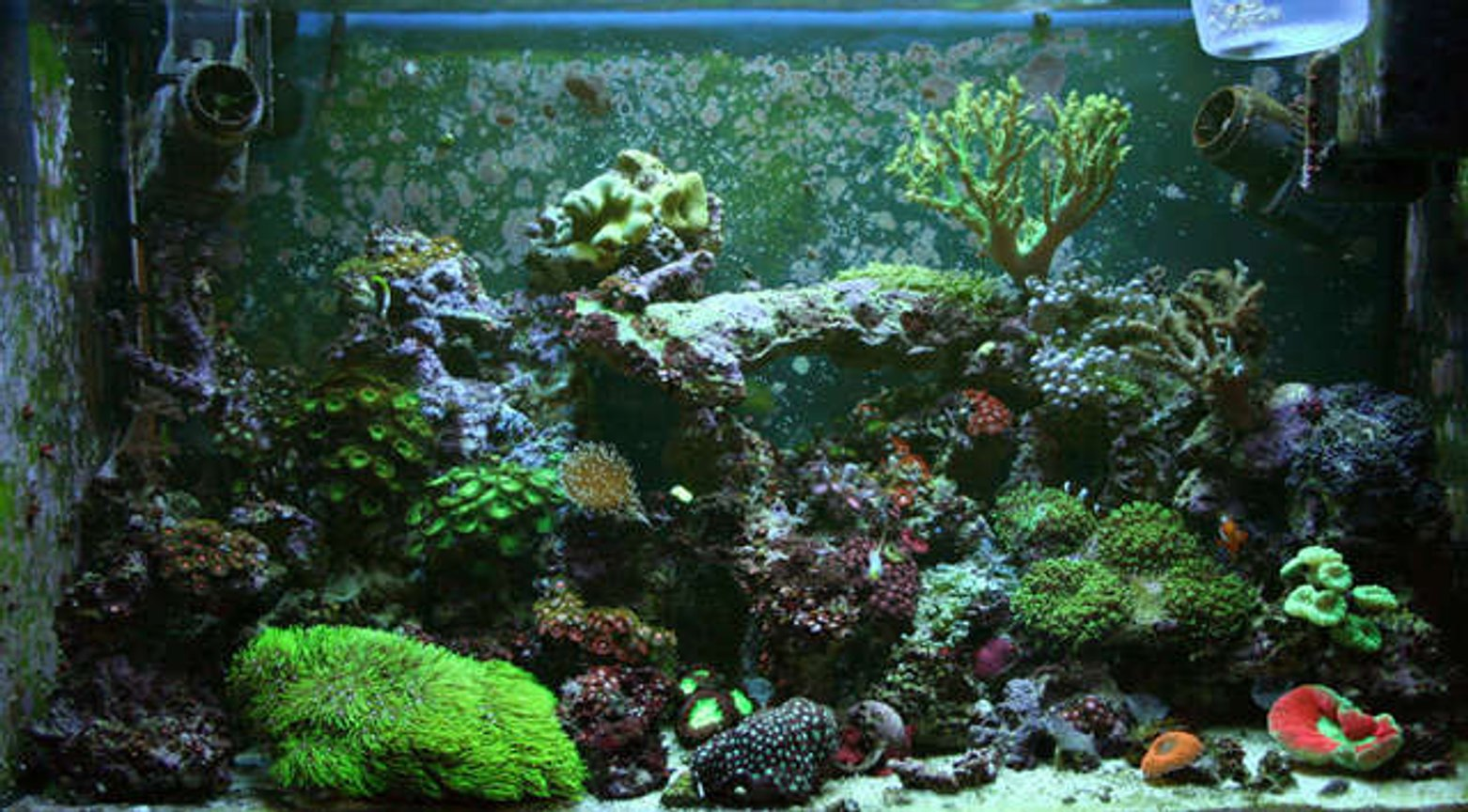 32 gallons reef tank (mostly live coral and fish) - 32g Reef Tunze Doc Skimmer 9002 Aqualight Pro 24 MH 150w 10 000K Reeflux + 2-65w actinics 50 lbs LR + 2 SEIO 620 Fish's & cleanup crew