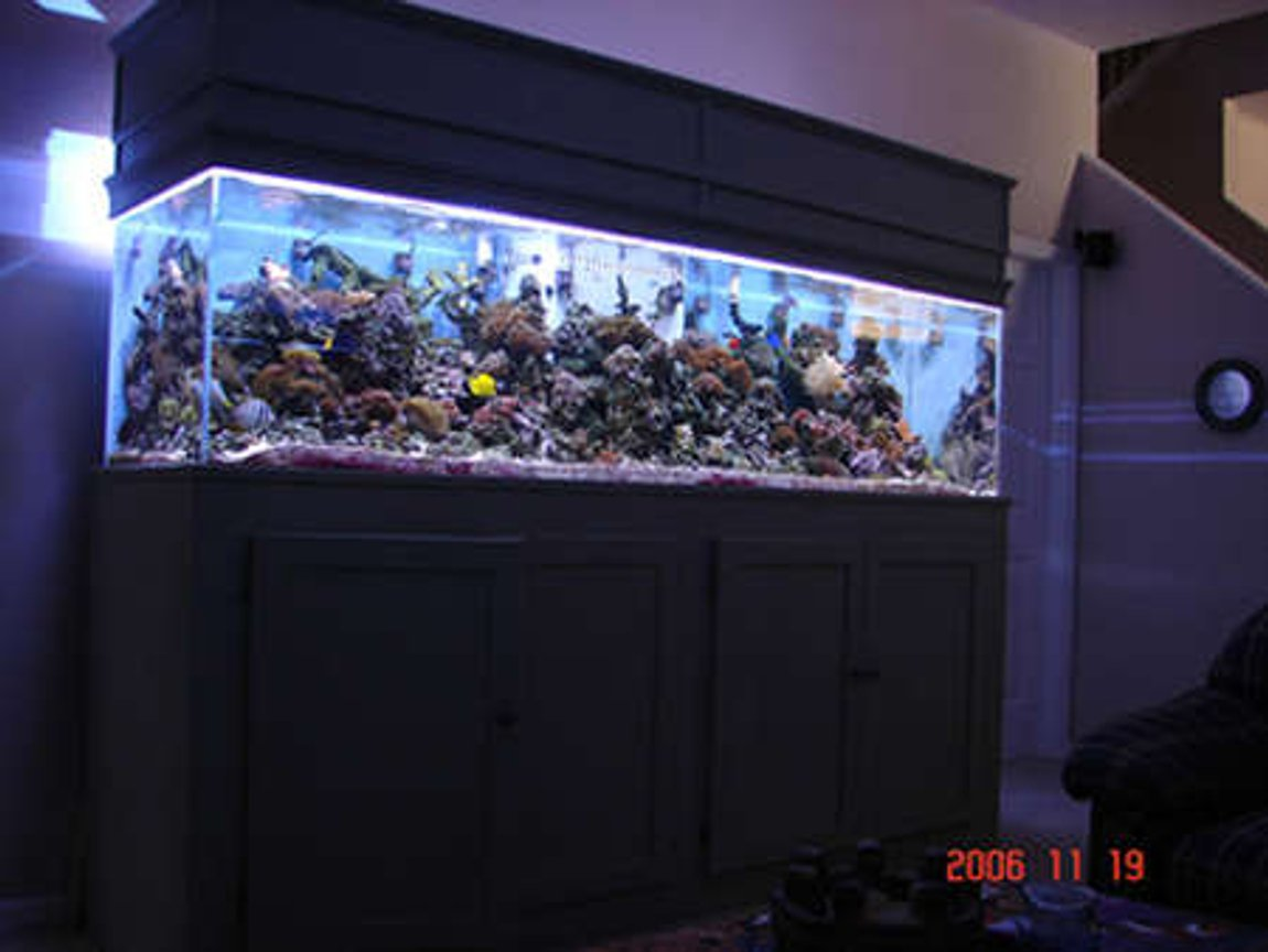 90 gallons reef tank (mostly live coral and fish) - another pic but updated what a difference