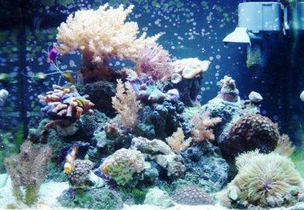 24 gallons reef tank (mostly live coral and fish) - One more Pic Of my Tank