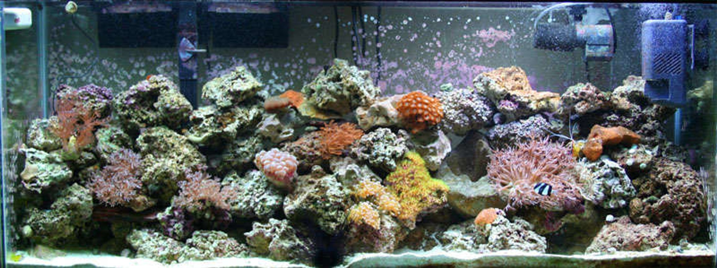 55 gallons reef tank (mostly live coral and fish) - A shot of my 55 gallon