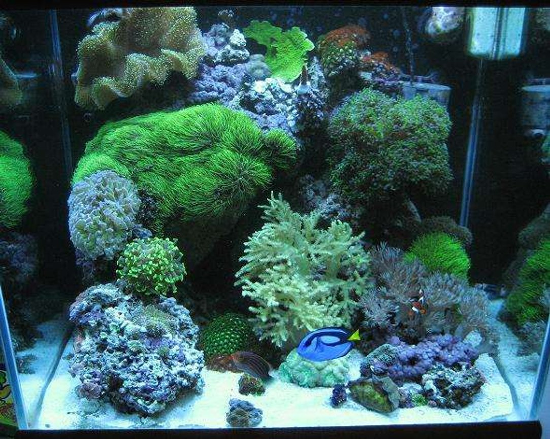 37 gallons reef tank (mostly live coral and fish) - j