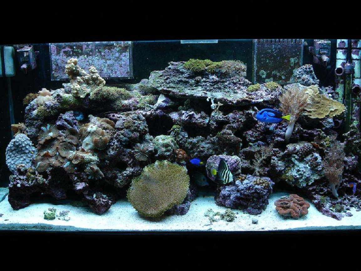 80 gallons reef tank (mostly live coral and fish) - front center