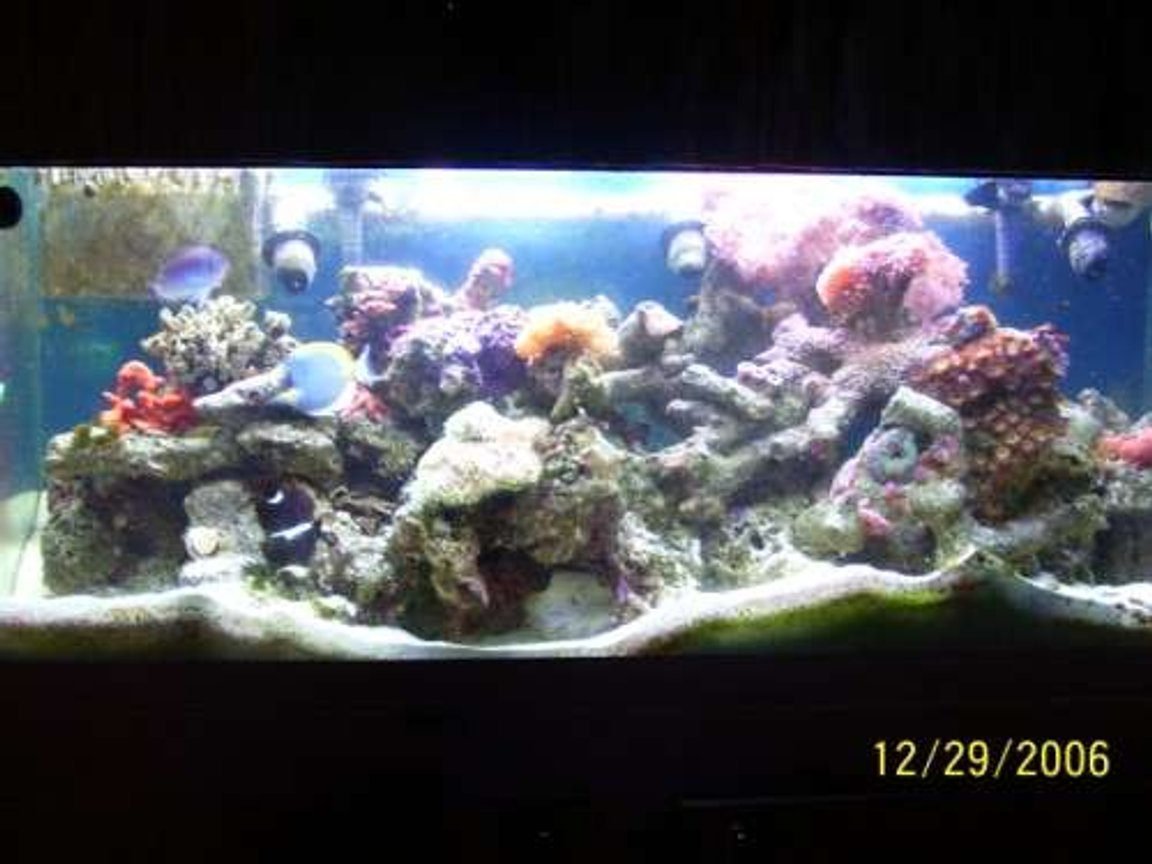 75 gallons reef tank (mostly live coral and fish) - Full tank view